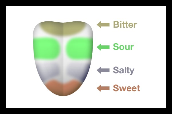 The 4 tasting zones on your tongue